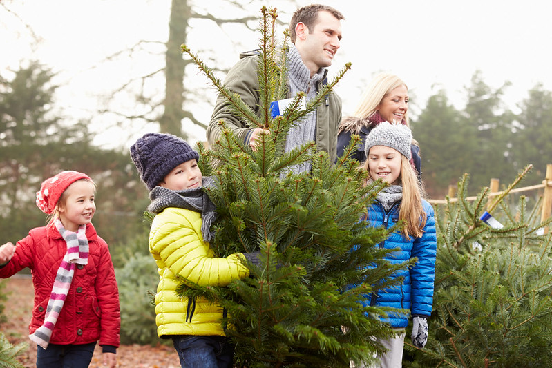 Tips for Safely Transporting a Christmas Tree - Robbins Toyota - Mt. Pleasant, TX